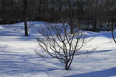 Dogwood in the nude - prior to a late winter snow.